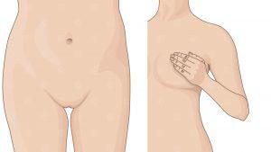 2D Illustration Brust und Venushügel